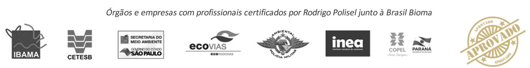 Brasil Bioma botânica e meio ambiente2