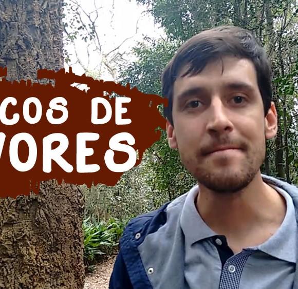 [Novo Vídeo] Tronco de Árvores – Identificação das Plantas