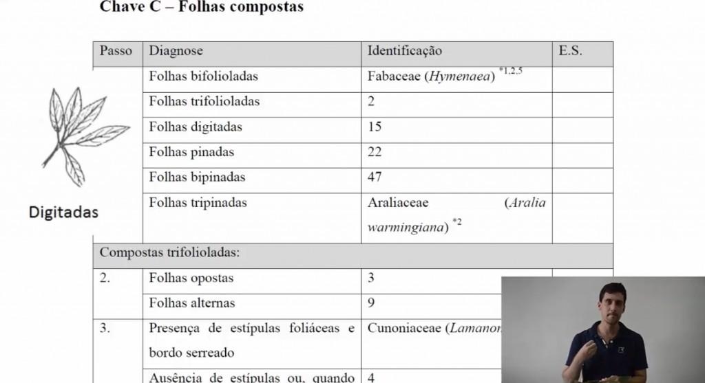 Chave de Identificação da Brasil Bioma