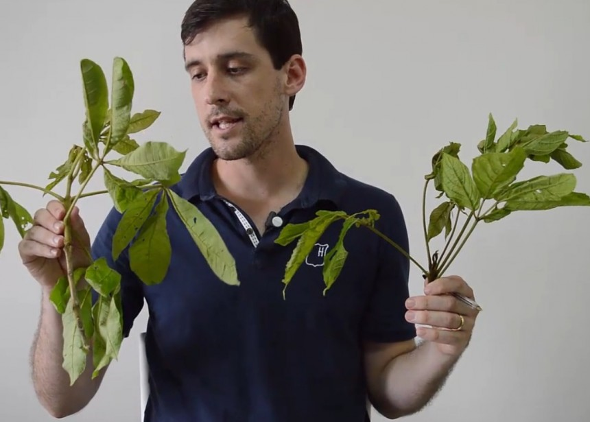 Aprenda a identificar as plantas em campo