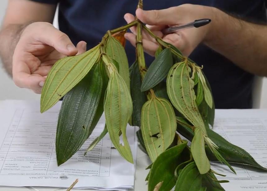 Curso de Taxonomia Vegetal – Novos Conteúdos