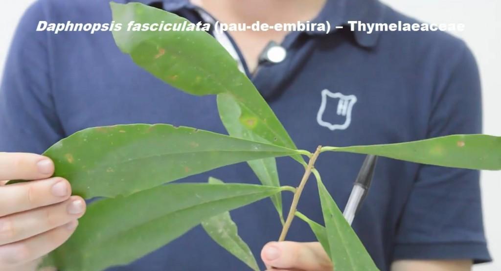 Folhas Simples e Alternas Espiraladas