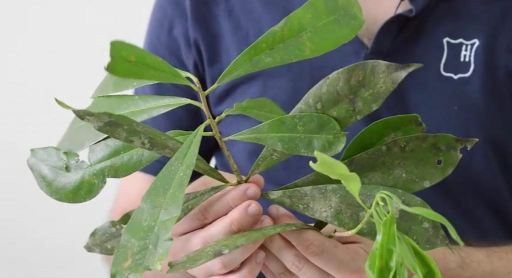 Fotos de Plantas