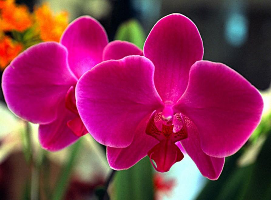 Manual Completo Como Cuidar de Orquídeas
