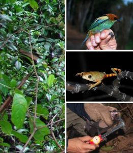 Curso de Fauna e Flora
