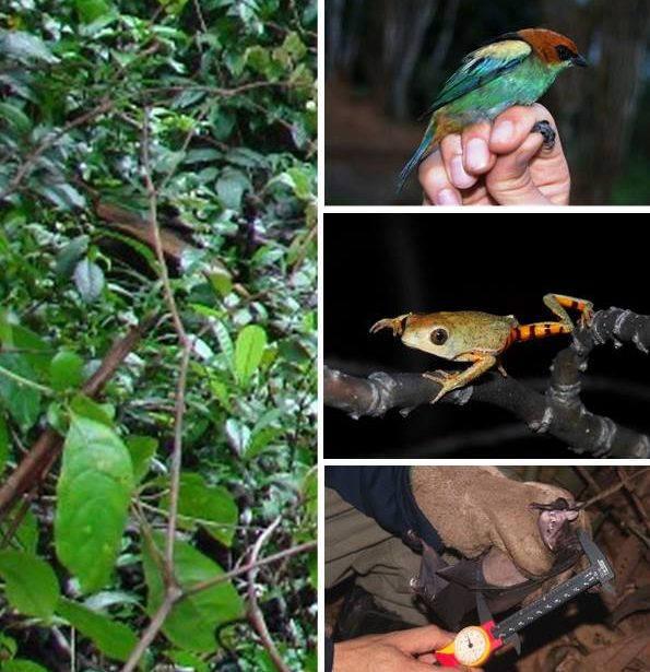 IV Curso de Inverno – Ferramentas para o diagnóstico de fauna e flora voltado para o licenciamento ambiental e manejo de áreas naturais