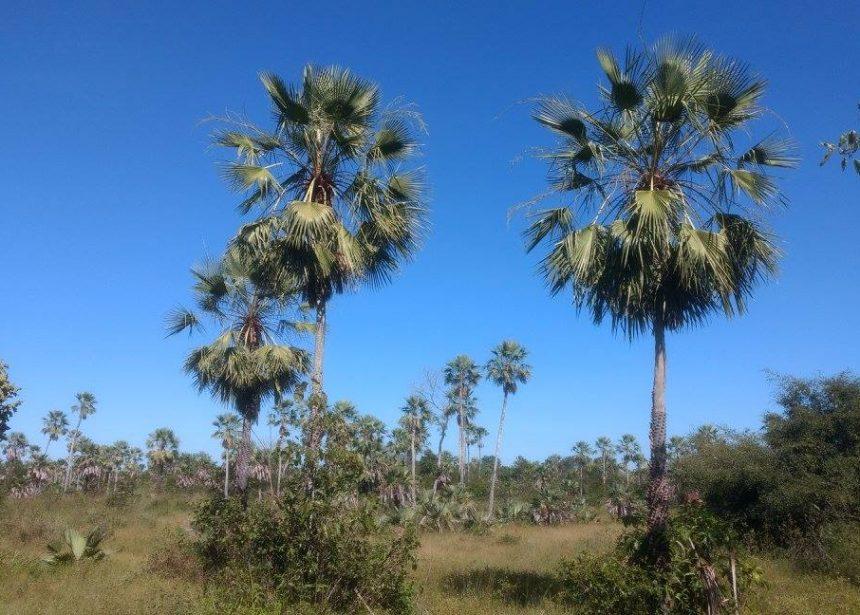 I Curso de Estudos de Flora no Licenciamento Ambiental